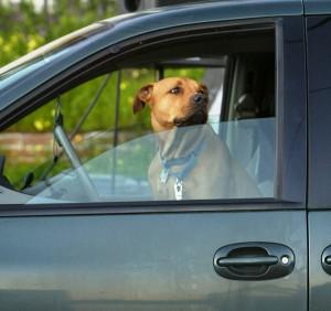 dog-car-justinsullivan